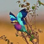 http://voices.nationalgeographic.com/2014/03/06/top-25-wild-bird-photographs-of-the-week-63/