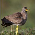 https://thewildernessalternative.com/2013/12/27/birds-of-kenya/kenya-birds-35/