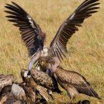 http://www.123rf.com/stock-photo/kenya_birds.html