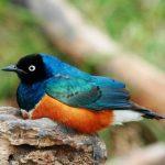 http://thecinemawebsite.com/2016/09/11/bird-watching-meditative-experience/