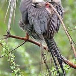 https://www.pinterest.com/janegilmore/birds-and-animals-kenya/