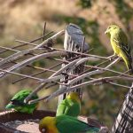 http://www.pandiawarleggan.com/kenya-birds/