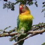 http://www.ontdekkenya.com/E/bird-photography/africa-easy-bird-watching.html