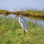 In Kenya, Africa, at lake Nakuru, it's a real paradise for birds of all kind, herons, ducks, geese etc