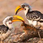 http://www.gritsphoto.com/kenya/birds-of-kenya/