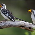 https://thewildernessalternative.com/2013/12/27/birds-of-kenya/
