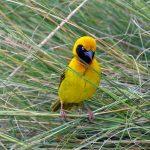 http://www.kenyahotelsltd.com/place/birds-in-kenya/