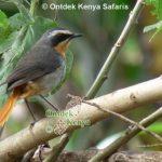 http://www.ontdekkenya.com/E/bird-photography/bird-identification-by-color.html