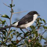 http://www.bnwilson.net/Travel/Africa/Kenya/Kenya-Birds/i-42qLjSD
