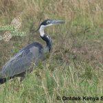 http://www.ontdekkenya.com/E/bird-photography/online-bird-identification.html
