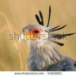https://www.shutterstock.com/search/kenya+birds