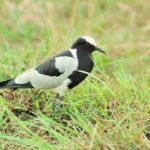 http://www.insightbirdingholidays.com/kenya/when-to-bird-in-kenya/