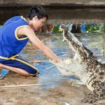 Crocodiles are cannibalistic