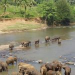 Threat to elephant populations in Eastern Africa is increasing as poaching is rising