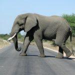 The elephants are very intelligent creatures