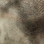 The elephant has a complex consciousness