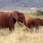 An elephant is capable of strong emotions