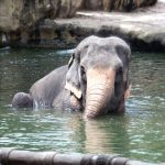 The elephant has strong emotions and complex consciousness
