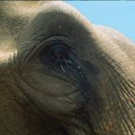 The elephants have strong emotions and complex consciousness