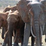 Elephant is an intelligent creature with complex consciousness and strong emotions