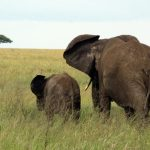Across Africa elephant has inspired respect from the people