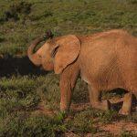 Elephants are tourism magnets