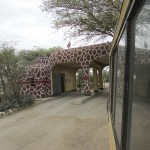 To deepen your experience of the bush, you should take advantage of guided game drives