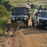 http://www.traveltoeastafrica.com/directory/listing/kenya-tanzania-wildlife-safaris-tours-and-holiday-trips