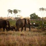 https://artofsafari.travel/what-to-do/luxury-safaris-northern-kenya/exploring-marvellous-meru-safari/