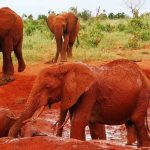 https://oranjesafari.com/rhino-kenya-safari