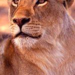 http://www.excelsafaris.com/Premier_Kenya_Safari.html