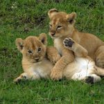http://www.africaexpeditionsupport.com/school-trips/safaris-adventure-tours-for-students/