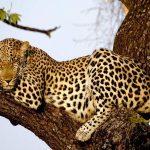 http://www.eaexoticsafaris.com/9-days-kenya-safari-amboseli-aberdares