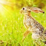 https://www.colourbox.com/image/wild-african-hare-sitting-on-the-flower-field-game-drive-wildlife-safari-animals-in-natural-habitat-beauty-of-nature-kenya-travel-masai-mara-image-2653584