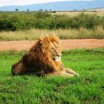 http://www.dallagotours.com/kenya-air-safari.htm