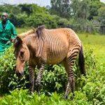 http://www.asyoulikeitsafaris.com/Kenya-Photographic-Wildlife-Safari.html