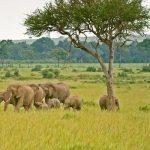 http://giltedgeafrica.com/destinations/