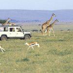 http://www.kenyasafari.com/lewa-samburu-mara-premier-safari.html