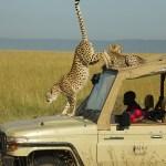 http://www.wildlifeworldwide.com/trip-ideas/samburu-masai-mara-safari
