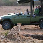 http://www.aardvarksafaris.co.uk/masai-mara-the-perfect-kenyan-holiday/
