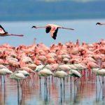 http://silverbacktravel.com/silverback/kenya-safaris