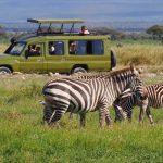 http://www.traveltoeastafrica.com/directory/listing/kenya-expresso-tours-and-safaris