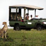 http://wild-wings-safaris.com/accommodation/mara-plains-camp/