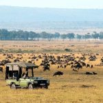 http://wild-wings-safaris.com/accommodation/mara-plains-camp/