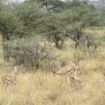 """Masai Mara in Kenya is one of the best places to see """"The Big Five"""""""