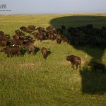 http://adventuresinafrica.com/2015/02/10/mara-plains/