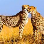 http://www.friendlyplanet.com/kenya-wildlife-safari.html