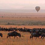 https://www.andrewharper.com/harper-way-travel-blog/read/how-to-choose-african-safari