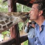 Giraffes and the okapis both have seven cervical vertebrae.