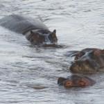 The Big Five are regularly seen on a standard Kenya safari